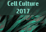 Three-dimensional cell culture: Innovations in tissue scaffolds and biomimetic systems