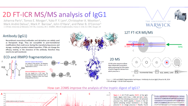 2D FT-ICR MS/MS analysis of IgG1