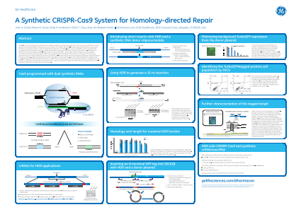 A Synthetic CRISPR-Cas9 System for Homology-directed Repair