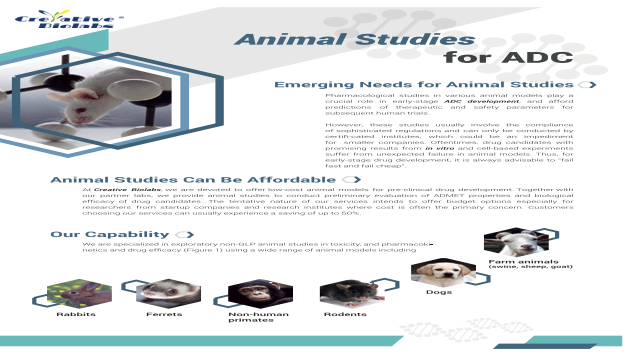 Animal Studies for ADC