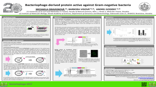 Bacteriophage-derived protein active against Gram-negative bacteria