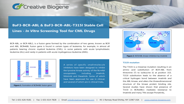 BaF3 Stable Cell Line