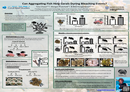 Can aggregating fish help corals during bleaching events?