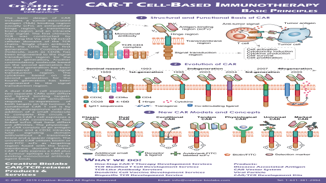 CAR-T Cell-based Immunotherapy Basic Principles