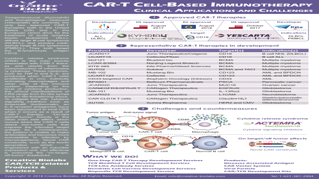 CAR-T Cell-Based Immunotherapy Clinical Applications and Challenges