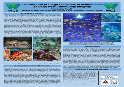 Contribution of Large Decapods to Maintenance of Coral Reef Community Integrity