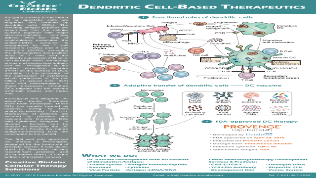 Dendritic Cell Based Immunotherapy-Creative Biolabs
