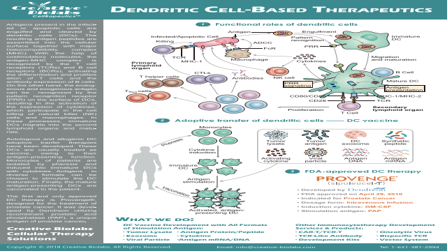 Dendritic Cell Based Immunotherapy