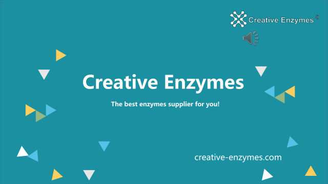 Detailed Introduction to Creative Enzymes