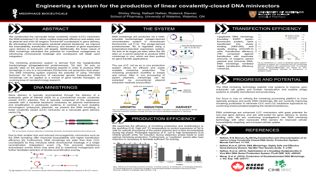 Engineering a system for the production of linear covalently-closed DNA minivectors