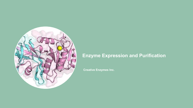 Enzyme Expression and Purification