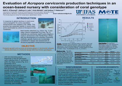 Evaluation of Acropora cervicornis production techniques in an ocean-based nursery with consideration of coral genotype