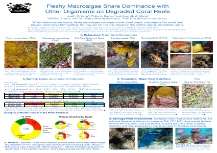 Fleshy Macroalgae Share Dominance with Other Organisms on Degraded Coral Reefs