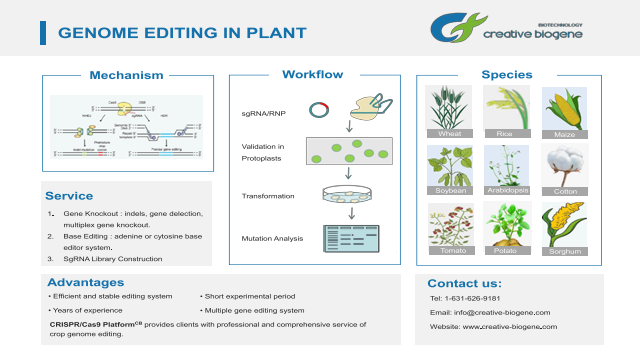 Genome Editing in Plant