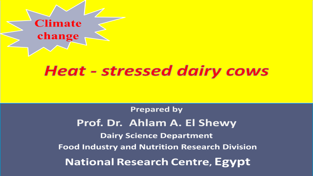 Heat - stressed dairy cows