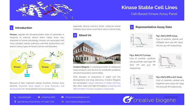 Kinase Stable Cell Lines