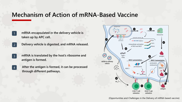 Mechanism of Action of mRNA-Based Vaccine