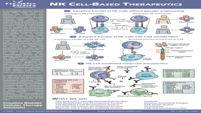 NK-Cell-Based-Therapeutics-Creative Biolabs