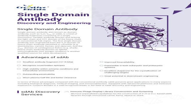 Single Domain  Antibody Discovery and Engineering