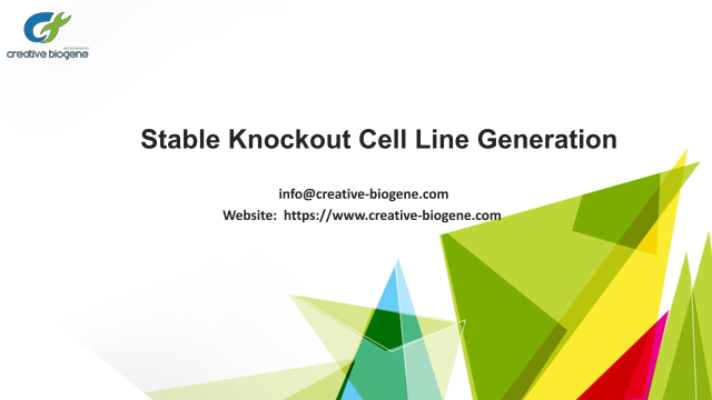 Stable Knockout Cell Line Generation